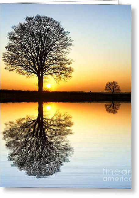 Bare Oak Tree Greeting Cards - Winter Tree Reflections Greeting Card by Tim Gainey