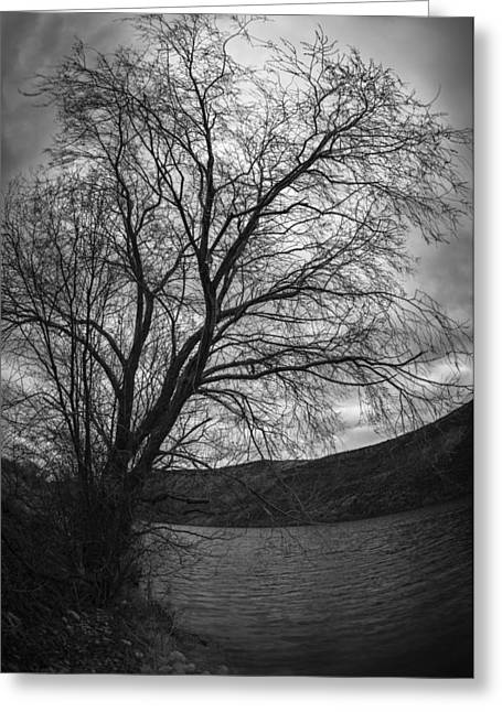 Bare Trees Greeting Cards - Winter tree Greeting Card by Vishwanath Bhat