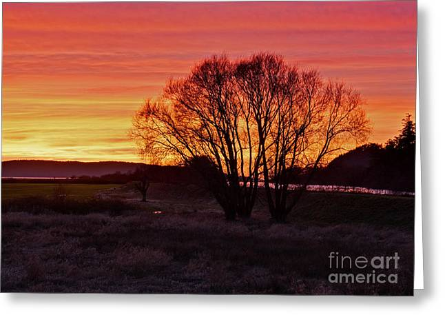 Winter Tree With Red Sky Greeting Card by Valerie Garner