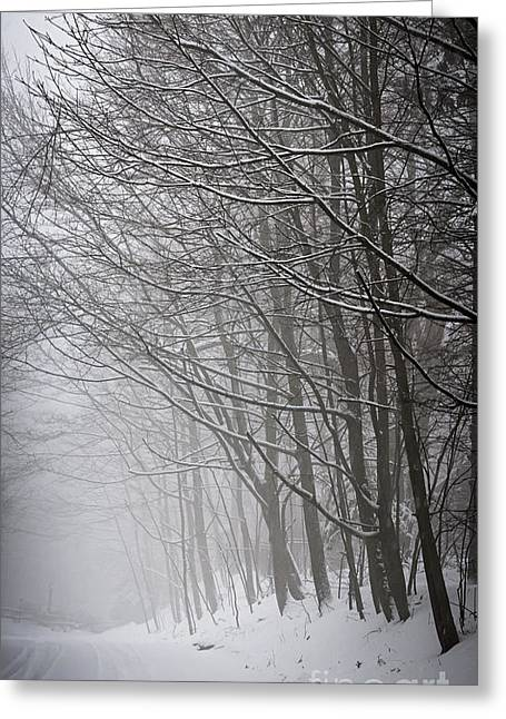 Driving Greeting Cards - Winter trees along snowy road Greeting Card by Elena Elisseeva