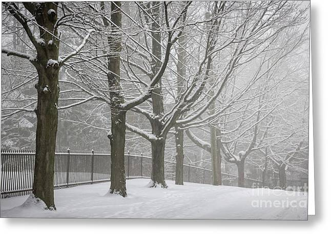 Conditions Photographs Greeting Cards - Winter trees and road Greeting Card by Elena Elisseeva