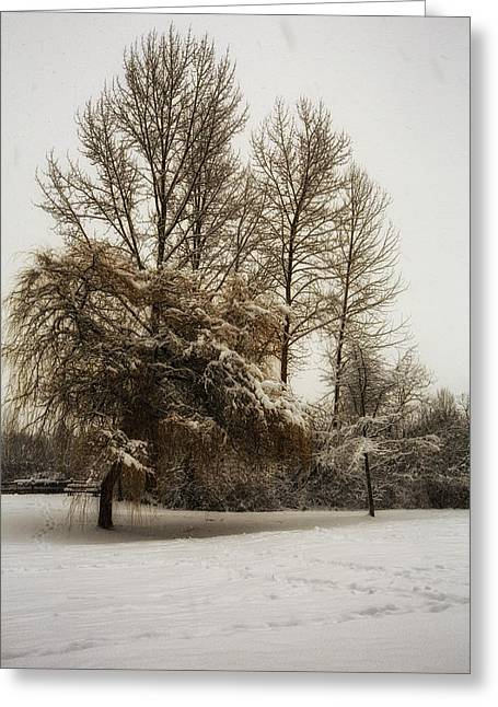 Overcast Day Digital Art Greeting Cards - Winter trees Greeting Card by Eti Reid