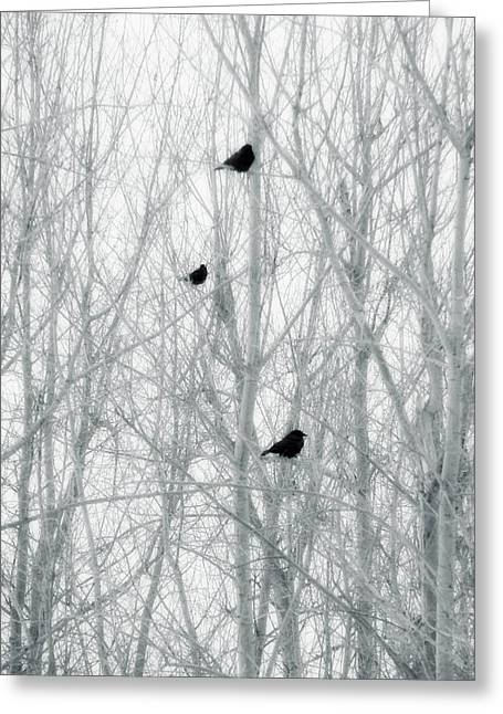 Crows In Trees Greeting Cards - Winter Trees Greeting Card by Gothicolors Donna Snyder