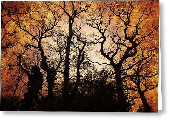 Eerie Greeting Cards - Winter Trees in Amber Greeting Card by Annabelle Ward