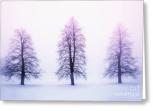Snowy Tree Greeting Cards - Winter trees in fog at sunrise Greeting Card by Elena Elisseeva