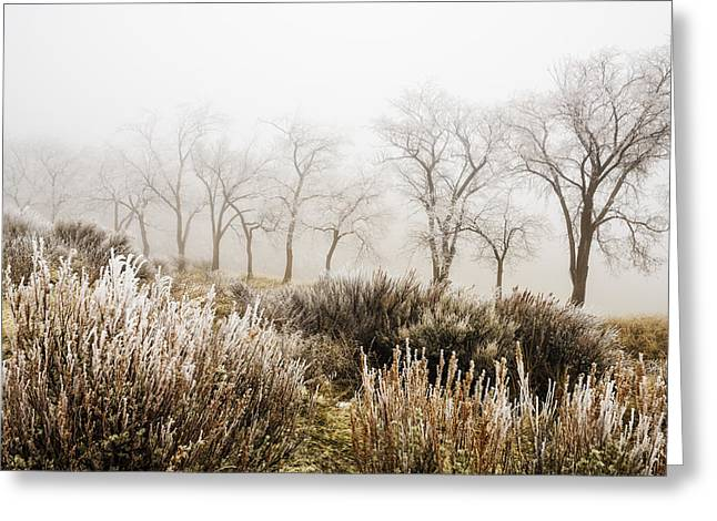 Bare Trees Greeting Cards - Winter trees in Idaho Greeting Card by Vishwanath Bhat