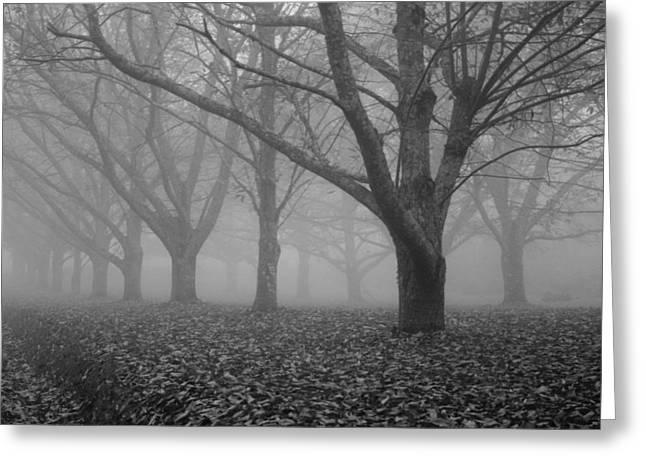 South Of France Greeting Cards - Winter trees in the mist Greeting Card by Nomad Art And  Design