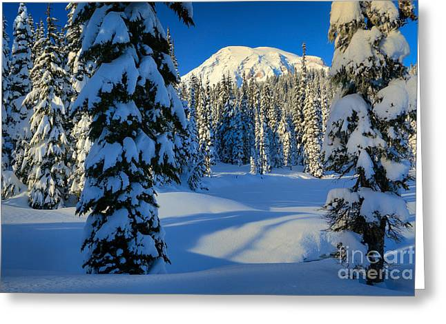 Pacific Northwest Greeting Cards - Winter Trees Greeting Card by Inge Johnsson