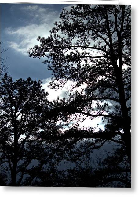 Jahred Allen Photography Greeting Cards - Winter Trees Greeting Card by Jahred Allen