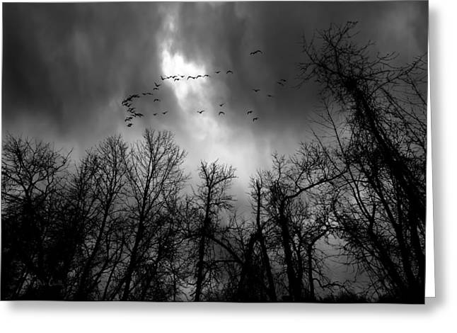 Winter Trees Moving Sky Greeting Card by Bob Orsillo