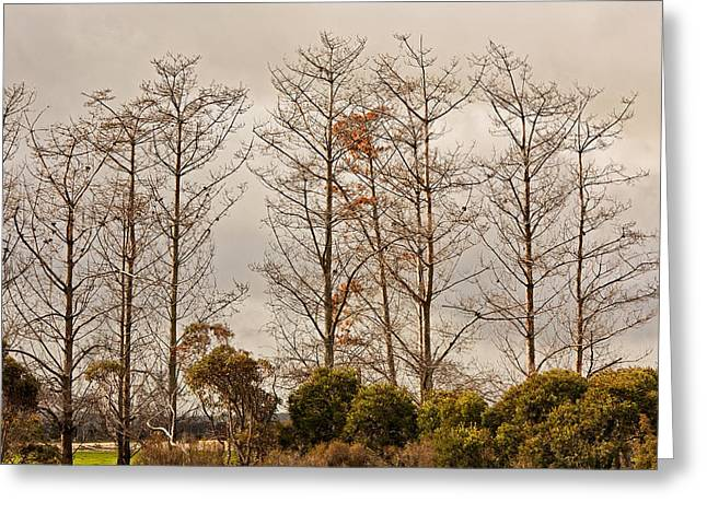 Niel Morley Greeting Cards - Winter Trees Greeting Card by Niel Morley