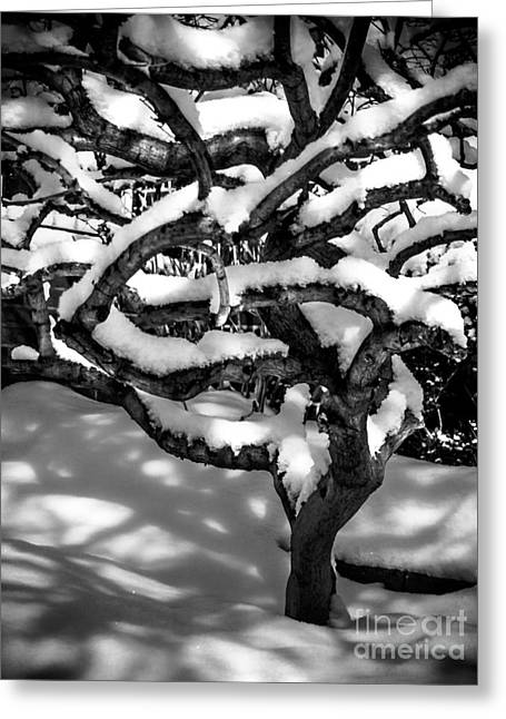 James Powders Greeting Cards - Winter Treescape Greeting Card by James Aiken
