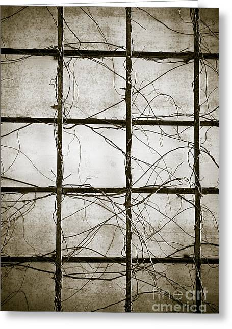 Vines Greeting Cards - Winter Trellis Greeting Card by Edward Fielding