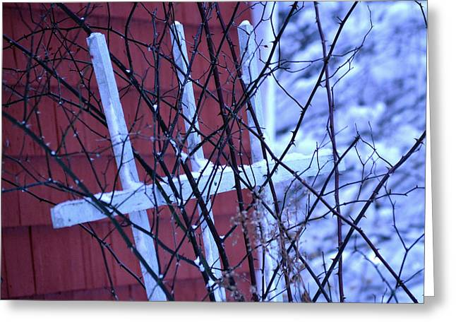 Trellis Greeting Cards - Winter Trellis Greeting Card by Pam Levy
