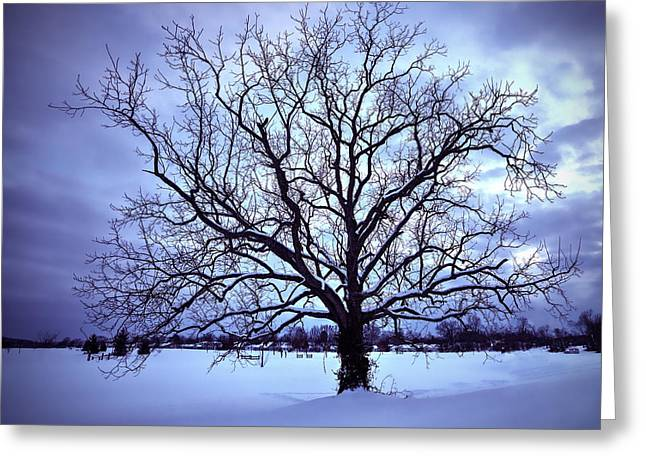 Trees In Snow Greeting Cards - Winter Twilight Tree Greeting Card by Jaki Miller