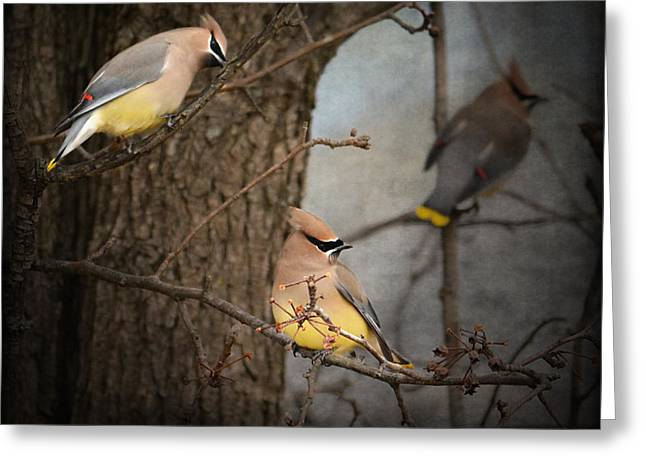 Cedar Waxwings Greeting Cards - Winter Visitors Greeting Card by Jai Johnson