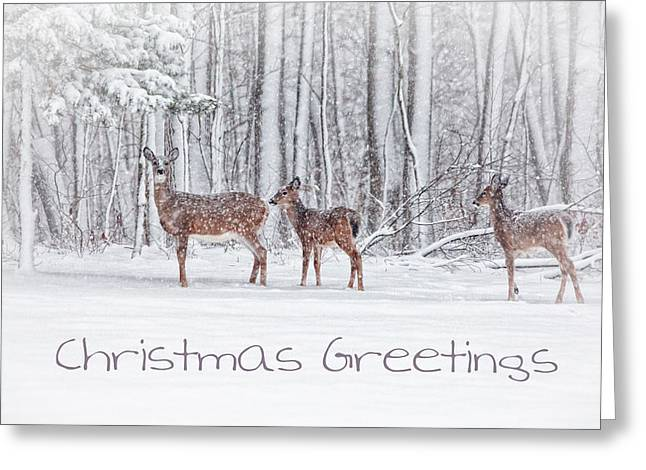 Connecticut Wildlife Greeting Cards - Winter Visits Card Greeting Card by Karol  Livote