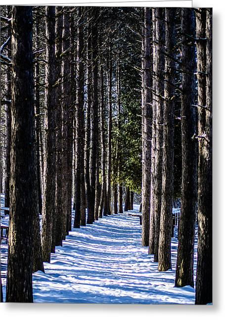 Nature Center Greeting Cards - Winter Walkway Greeting Card by Randy Scherkenbach