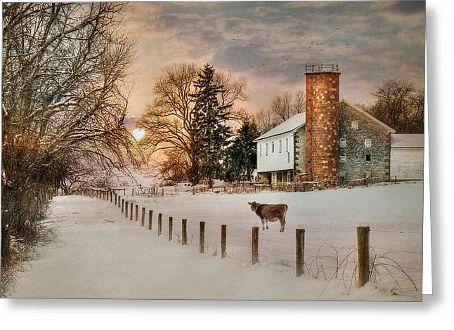 Steer Greeting Cards - Winter Warmth Greeting Card by Lori Deiter