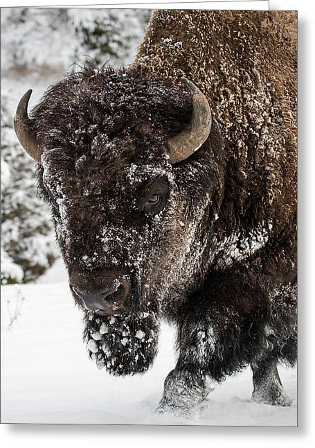 Tatanka Greeting Cards - On the Road Again Greeting Card by Sandy Sisti
