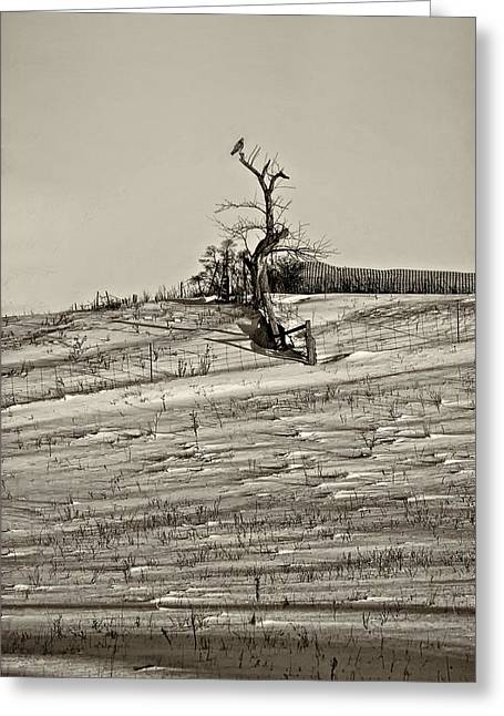 Red Tail Hawk Photo Greeting Cards - Winter Watcher sepia Greeting Card by Steve Harrington