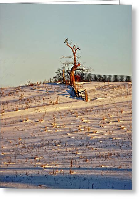 Red Tail Hawk Photo Greeting Cards - Winter Watcher Greeting Card by Steve Harrington