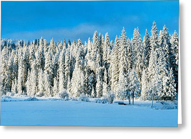 Snow Covered Field Greeting Cards - Winter Wawona Meadow Yosemite National Greeting Card by Panoramic Images