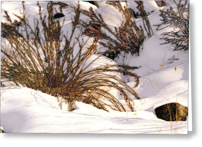 Winter Weeds Greeting Card by Kae Cheatham