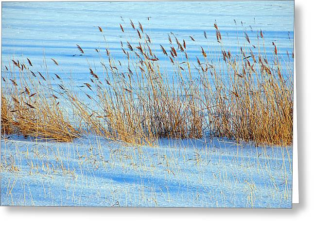 Winter Wheat Greeting Card by Aimee L Maher Photography and Art Visit ALMGallerydotcom