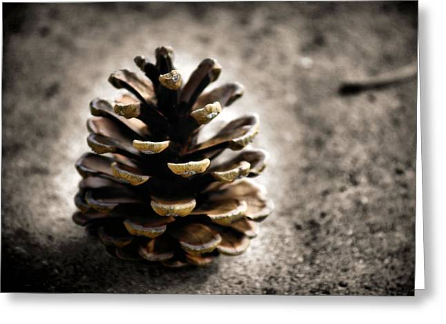 Pine Cones Greeting Cards - Winter Wheat Greeting Card by Karen M Scovill