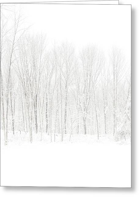 See Fog Greeting Cards - Winter White Out Greeting Card by Karol  Livote