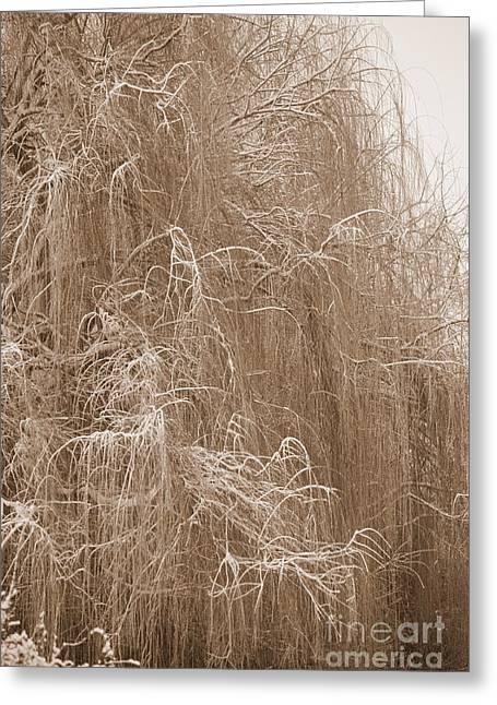 Weeping Greeting Cards - Winter Willow in Sepia Greeting Card by Carol Groenen