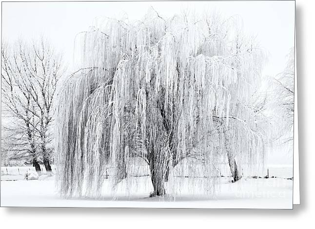 Willows Greeting Cards - Winter Willow Greeting Card by Mike  Dawson