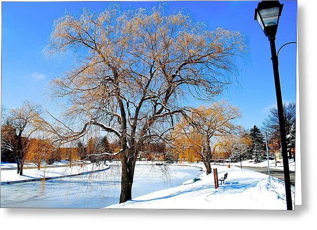 Willow Lake Greeting Cards - Winter Willow Greeting Card by Frozen in Time Fine Art Photography