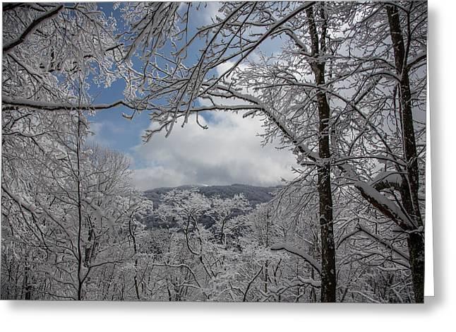 Winter Window Wonder Greeting Card by John Haldane