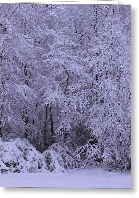 Snow Scenes Greeting Cards - Winter Wonderland 1 Greeting Card by Mike McGlothlen