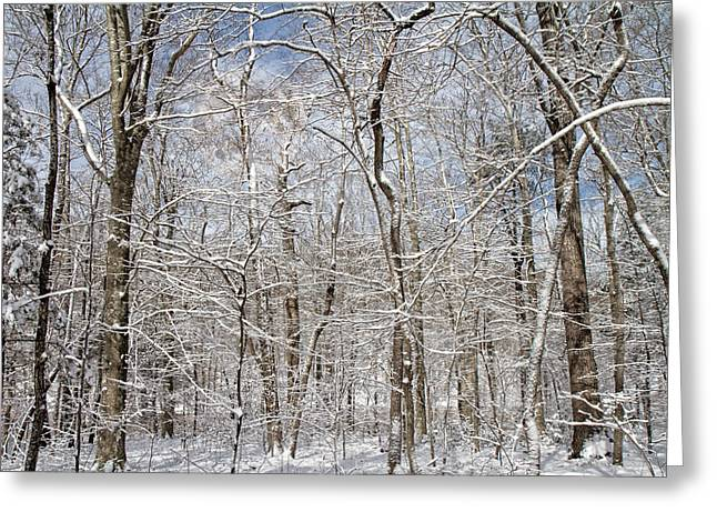 Winter Wonderland Greeting Card by Betsy C Knapp