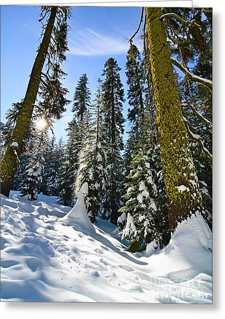 Winter Scenes Rural Scenes Greeting Cards - Winter Wonderland of Badger Pass in Yosemite National Park Greeting Card by Jamie Pham