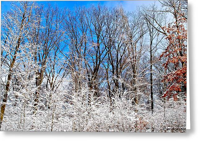 Paint It Greeting Cards - Winter Wonderland Greeting Card by Frozen in Time Fine Art Photography