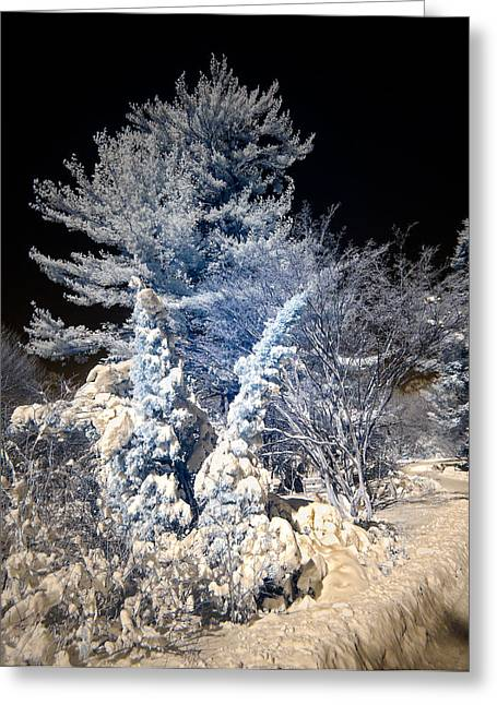 Snow Scenes Greeting Cards - Winter Wonderland Greeting Card by Steve Zimic