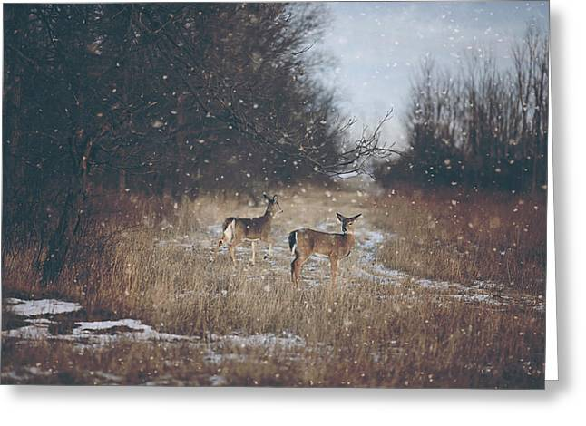 Winter Wonders Greeting Card by Carrie Ann Grippo-Pike