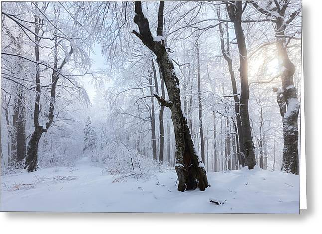Balkan Greeting Cards - Winter Wood Greeting Card by Evgeni Dinev