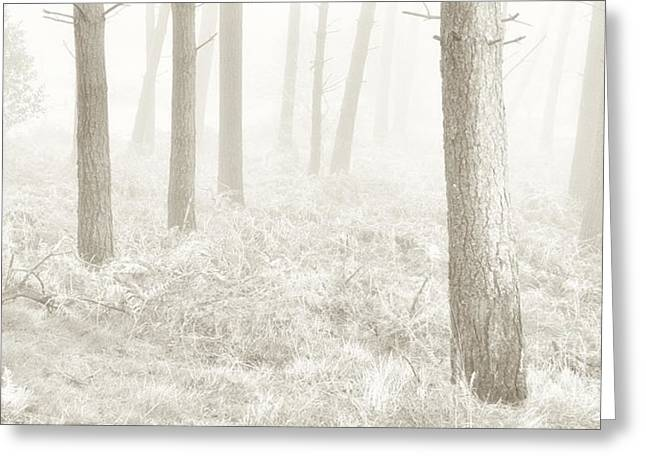 Frost Photographs Greeting Cards - Winter Woodland Greeting Card by Janet Burdon