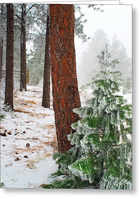 Julie Magers Soulen Greeting Cards - Winter Woodland Pine Tree Greeting Card by Julie Magers Soulen
