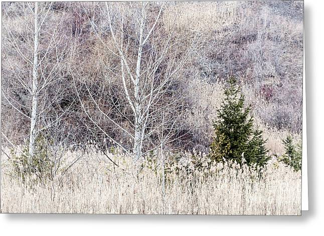 Mute Greeting Cards - Winter woodland with subdued colors Greeting Card by Elena Elisseeva