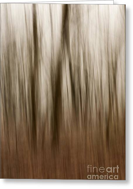 Wintry Photographs Greeting Cards - Winter Woods Abstract Greeting Card by Anne Gilbert