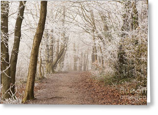 Haze Greeting Cards - Winter Woods Greeting Card by Anne Gilbert