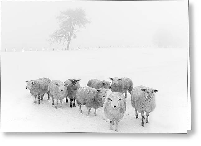 White Photographs Greeting Cards - Winter Woollies Greeting Card by Janet Burdon