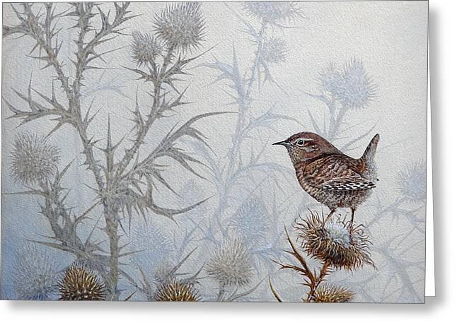 Winter Wren Greeting Card by Mike Stinnett