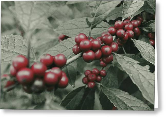 Winter Holiday Greeting Cards - Winterberry Greeting Card by Photographic Arts And Design Studio